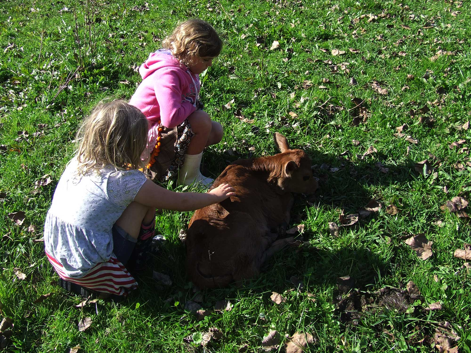 Teacher in the Paddock - Kids & Calf